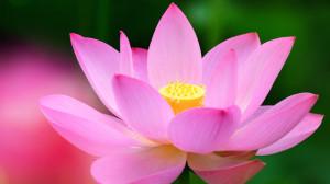 Yoga Nidra @ Nishi L8 | Canberra | Australian Capital Territory | Australia