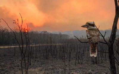 Yoga & Meditation Fundraiser for Bushfire Victims